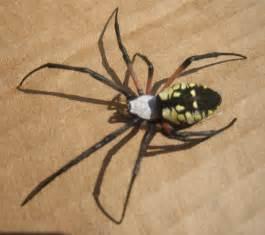Poisonous Spiders North Carolina