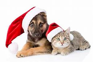 Pictures of Dogs for Christmas Season - Dog Pictures