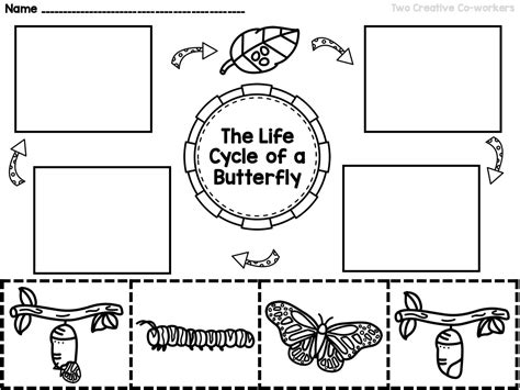 the cycle of a butterfly printable mini book 912 | 98719f1dafecb1a89e089340525b4641