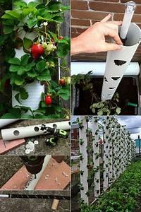 Rankhilfe Für Zimmerpflanzen : erdbeeren pflanzen in diy containers so geht s pflanzen pinterest erdbeeren pflanzen ~ Yasmunasinghe.com Haus und Dekorationen