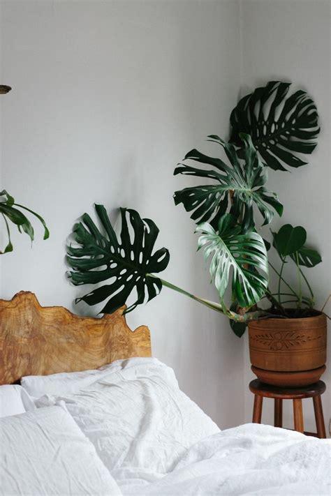 Plants In Bedroom by 25 Best Ideas About Bedroom Plants On Plants