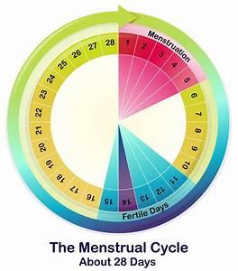Fruchtbare Tage Frau Berechnen : unregelm ige menstruation ~ Themetempest.com Abrechnung