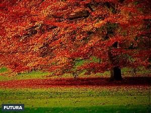 fond d39ecran automne jardin national botanique belgique With forum plan de maison 13 fond decran feuilles dautomne