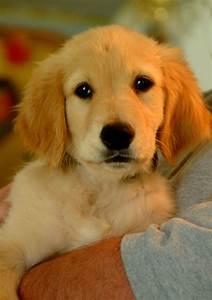 dog rescue, dog... Dogs For Adoption