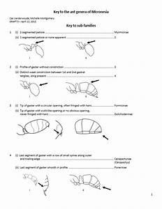Pacific Ant Program