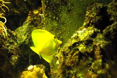 parc aquarium les naiades parc aquarium les na 239 ades 224 ottrott 67530 t 233 l 233 phone horaires et avis