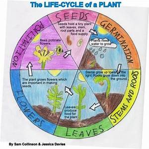 Third Of Life : 25 best ideas about plant life cycles on pinterest life cycle of plants teaching plants and ~ Orissabook.com Haus und Dekorationen