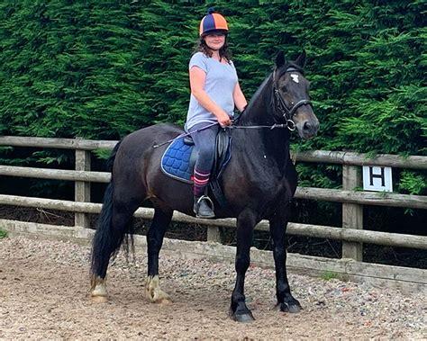 riding horses bryn