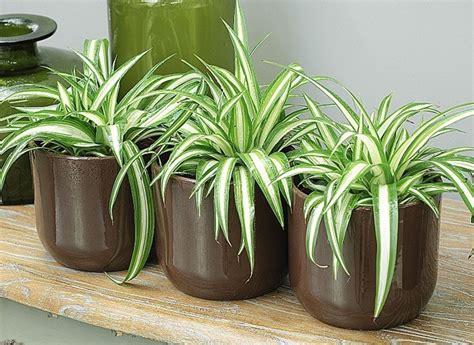 purifier l air d une chambre les plantes qui dépolluent les maisons senior active