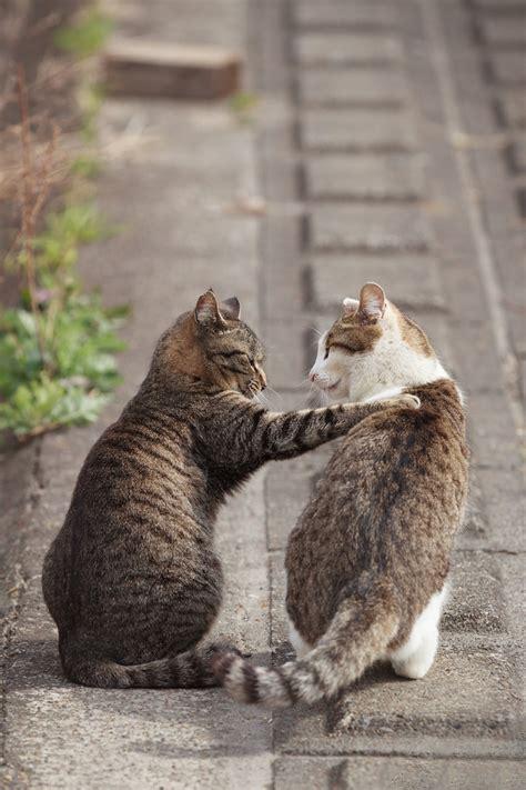 Sweet Animals Wallpaper - cats sweet friend animal wallpaper 1440x2160