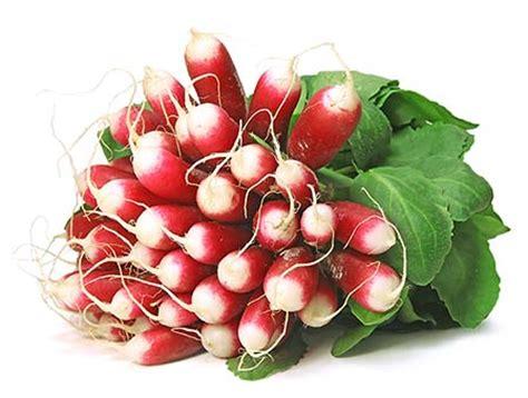 radis noir cuisine les radis roses priméale