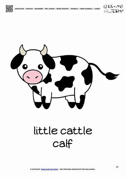 Flashcard Farm Cow Calf Card Animals Animal