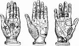 Palm Reading Clipart Clip Hands Digital Fortune Astrology Stamp Palmistry Teller Coloring Hand Printable Line Telling Graphics Clipground Charts Etsy sketch template