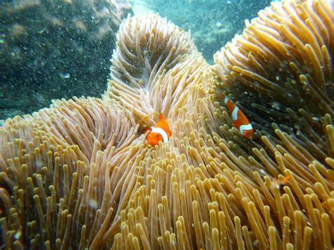 reef barrier stralia abroad ad exploring underwater adventure amazing