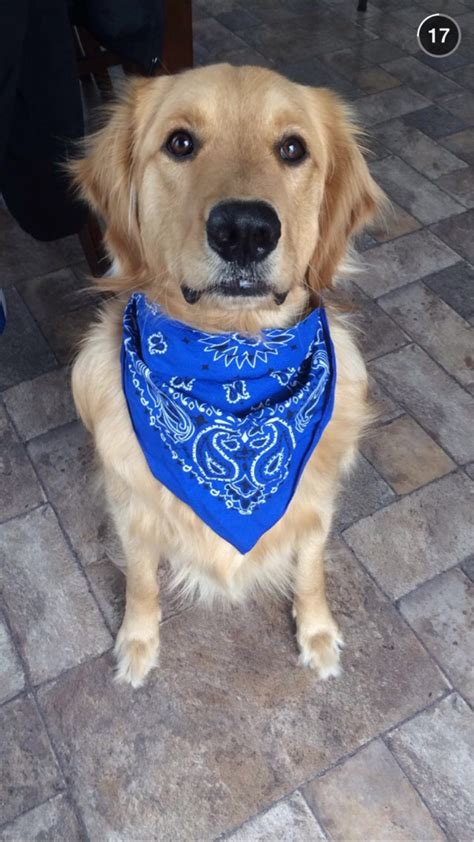 New To Reddit This Is A Test Post Of My Very Cute Golden