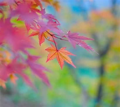 Fall Wallpapers Desktop Early Change Themed Seasons