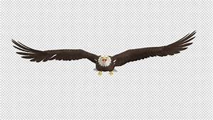 Eagle - Bald - Flying Loop - Front View - 4K by ...