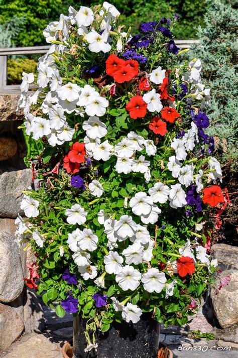 fiori per il giardino una torre di fiori in giardino 20 idee creative a cui