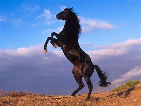 horse horses wallpaper 31184837 fanpop