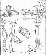 Coloring Pond Water Coloriage Eau Colorier Habitat Cycle Wetland Wetlands Animals Printable Ecosystem Animal Nature August Ocean Dessin Month Marais sketch template