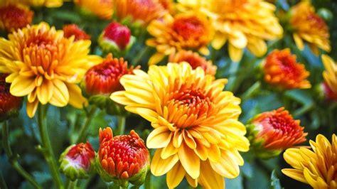 flowers  plant   fall