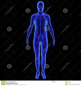 Body With Nervous System Stock Illustration