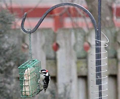 how do you get birds to come to your feeder amazon com