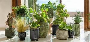 Marc De Café Plantes D Intérieur : cache pots et suspensions design pour des plantes du sol au plafond madame figaro ~ Melissatoandfro.com Idées de Décoration