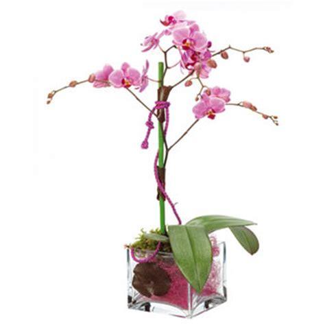 orchid 233 es vari 233 t 233 s entretien le fleursinfo