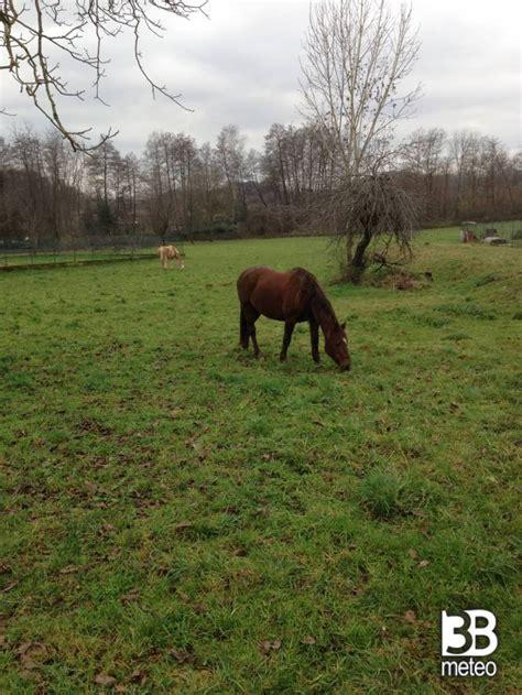dati cavalli cavalli al pascolo foto gallery 171 3b meteo
