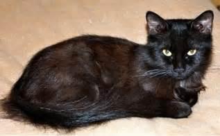 chocolate cat york chocolate cat