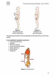 Diaphragm And Posture