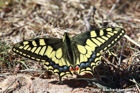 bienen niedrigere klassifizierungen insekten bestimmen steckbrief k 228 fer namen feinde gr 246 223 e bilder natur beobachtungen