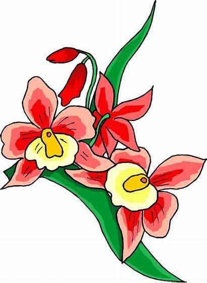 Flowers Clipart Clip Flower Cliparts Google Dancing