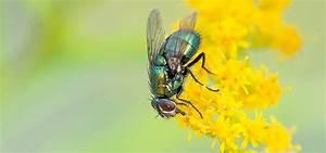 Welchen Geruch Mögen Wespen Nicht : insekten vertreiben mittel gegen m cken wespen und co ~ Articles-book.com Haus und Dekorationen