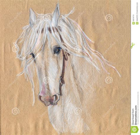 colored pencil drawing   white horsebeautiful eyes