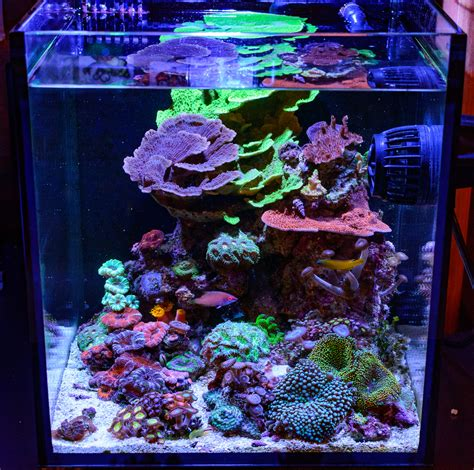 teenyreef s 10g fusion struggling for balance members aquariums nano reef forums