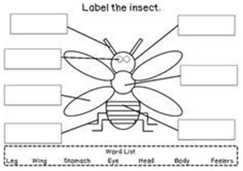 print    butterfly diagram  teach