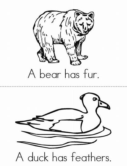 Fur Feathers Scales Shells Animal Animals Worksheets