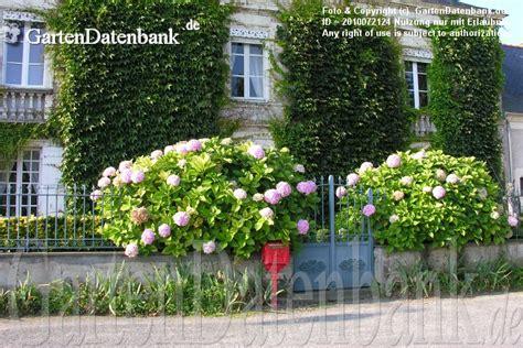Kleine Sträucher Vorgarten by Wei Bilder 443 Fotos