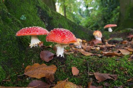 Pilze Im Garten Giftig Für Hunde by Gefahren Im Herbst Naturheilpraxis F 252 R Hunde