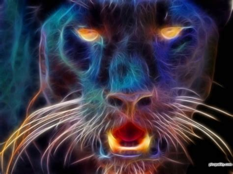 Animal Magic Wallpaper - ಌ magical of tiger ಌ cats animals background