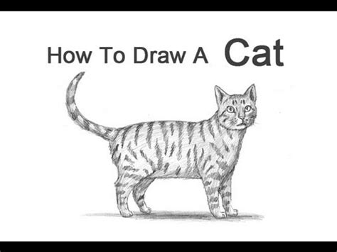 How To Draw A Cat (tabby) Youtube