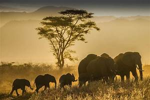 30 Wildlife Destination Pictures From The Nat Geo Travel