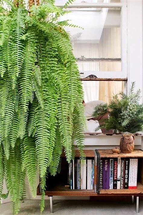 le pour plante interieur les 25 meilleures id 233 es de la cat 233 gorie d 233 cor de plantes d int 233 rieur sur d 233 cor de