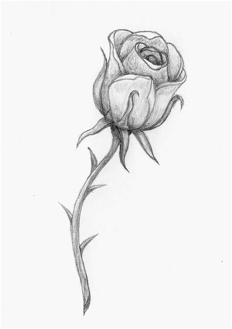 Rose Tattoo stencil | Roses drawing, Rose sketch