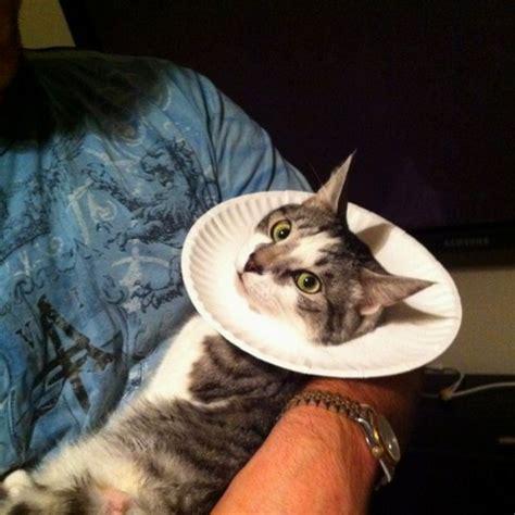 homemade cat cone pets pinterest