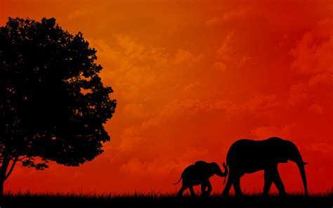 In Background Elephant Background