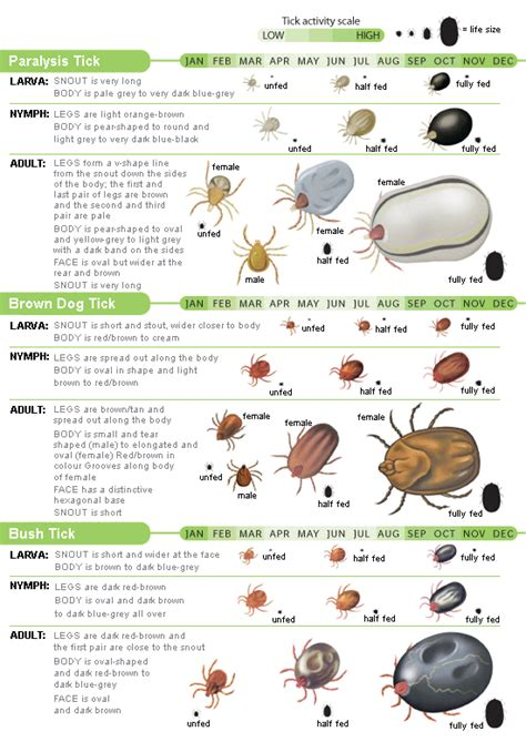 tick identification chart signs quakers hill veterinary