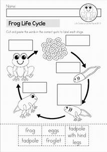 Frog Life Cycle By Lavinia Pop